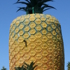 The Big Pineapple Located On The Edge Of Town