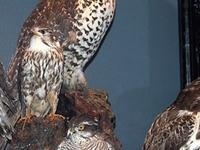 The Bird Museum at Myvatn