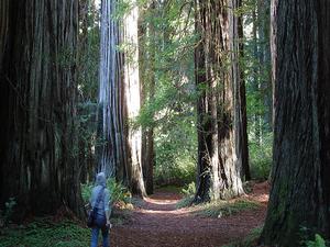 The Hiouchi Trail