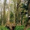 The Jesionowe Góry Reserve