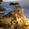 The Lone Cypress A Symbol