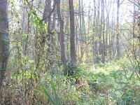 The Wielki Dział Reserve