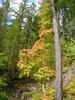 Thunder Knob Trail