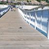 Tiburon Pier