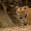 Tiger Reserve National Parksatakosia