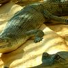 Tikarpada Wildlife Sanctuary 1