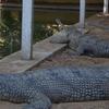 Tikarpada Wildlife Sanctuary 2