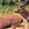 Tipeshwar Wildlife Sanctuary