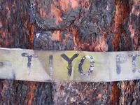 Tiyo Point Trail