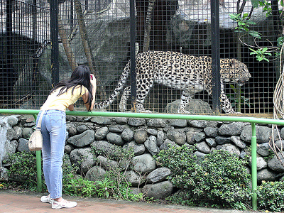 Tourist Attractions In Avilon Zoo