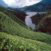 Tourist Attractions In Nuwara Eliya