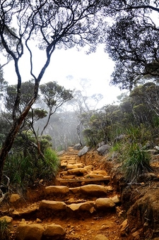 Trail Up Mount Kinabalu