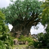 The Tree Of Life, The Icon Of Disney's Animal Kingdom