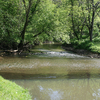 Trout River