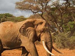 Kenya Premium Safari
