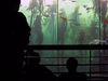 The Main Kelp Forest Tank In Two Oceans Aquarium