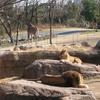 Tennōji Zoo