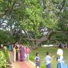The Biggest Banayan Tree Pillalamarri Symbol Of District