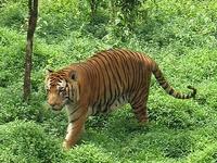 Sathyamangalam Wildlife Sanctuary