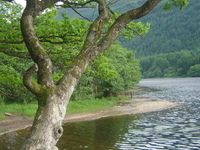 Trossachs