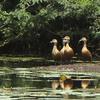 Udhayamarthandapuram Birds Sanctuary