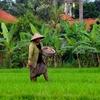Umalas Bali Countryside