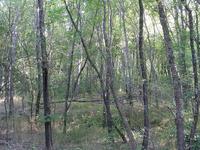 Una Del Oso Trail 201