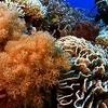 Under-water World Of Sangalaki Island
