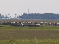 Upper-Kiskunság Sodic Plain-Réce Study Trail