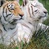 Ushakothi Wildlife Sanctuary Orissa