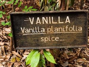 Zanzibar's Spice Plantations Photos