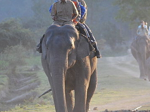 Van Vihar National Park Elephant Rides
