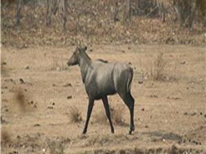Veerangana Wildlife Sanctuary