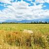 Mendoza Province