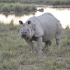 View Of Rhino