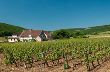 View Vineyards Near Gevrey-Chambertin