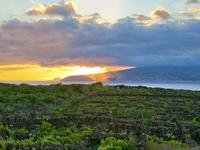 Paisaje cultural vitícola de la Isla de Pico