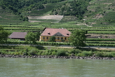 Vineyards Danube Wachau
