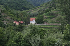 Wachau Vineyards Terraced