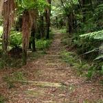 Waitaanga South Road to Te Rerepahupahu Falls