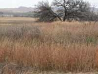 Washita Battlefield National Historical site
