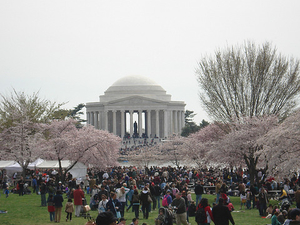 Weekend Cherry Blossom and Monuments Cruise in Washington DC Photos