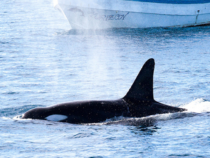 Whale Watching / Sport Fishing & Coastal Cruise In Mirissa Photos