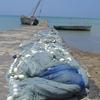 Wharf At Mkoani . Havenpier In Mkoani 2 C Pemba 2 C Tanza