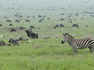Tanzania North Circuit Safari 7 Days Photos