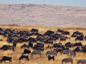 Tanzania Wildebeests Migration Safari