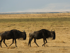 5 Days Ngorongoro Safari & Trekking: Emapkaai to Natron Photos