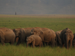 Jim Corbett National Park 3 Days Tour Photos