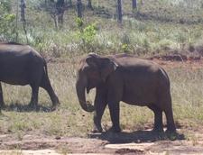Cotigoa Wildlife Sanctuary