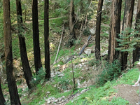 Blevins Picnic Site